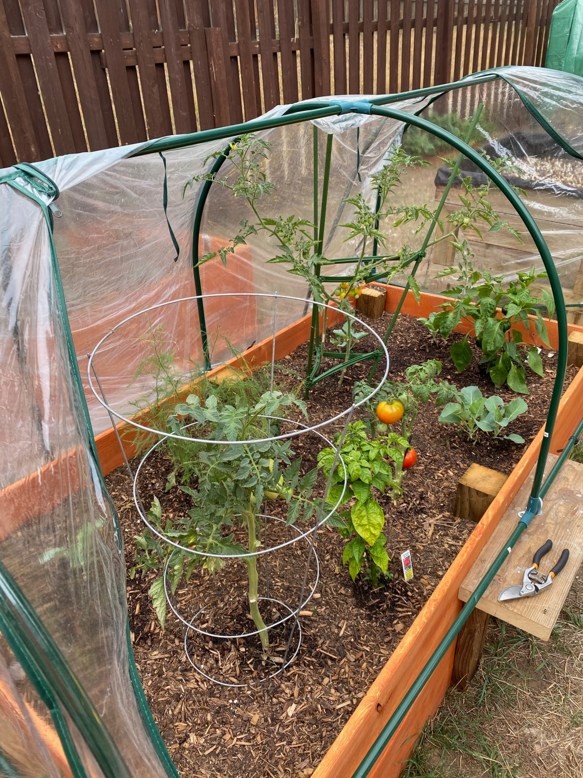 Growing Our Own Food – Update September2020